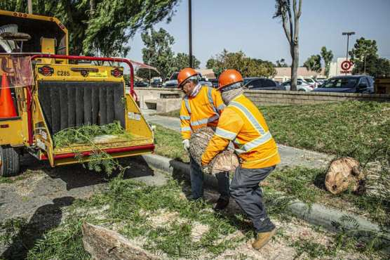 Public Works Crews Remove Sections of a Tree