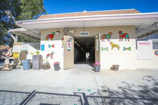 animal shelter - castaic animal care center