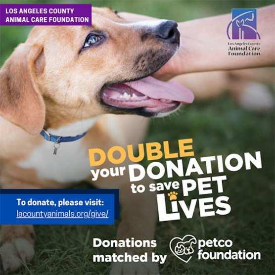 Petco Foundation Campaign