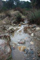 Placerita Creek   Photo by Evelyne Vandersande