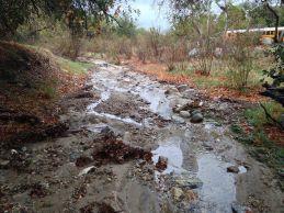 Placerita Creek   Photo by Ron Kraus
