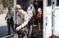 Deputy Bausmith unloads Santana from the trailer to start their patrol at Castaic Lake Park on Friday, Jan. 31, 2016.