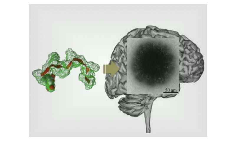 Overcoming the blood-brain-barrier: Delivering therapeutics to the brain