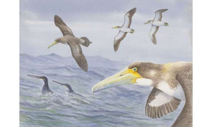Scientists discover one of world's oldest bird species at Waipara, New Zealand