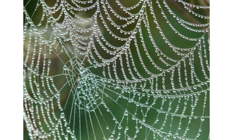 The Mathematics Of Prey Detection In Spider Orb Webs
