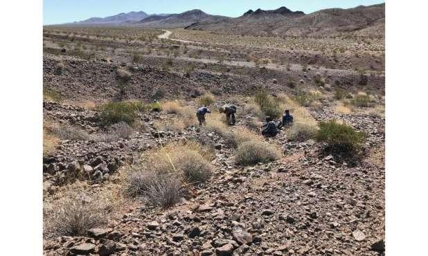 Rising Temps put desert bushes in high efficiency mode