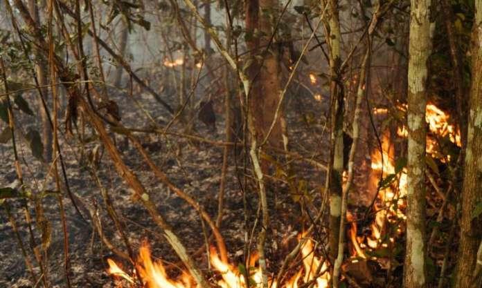 Novas pesquisas mostram que o El Niño contribui para o colapso de insetos na Amazônia