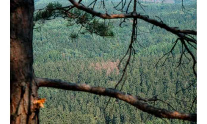 Satellite images display changes in the condition of European forests