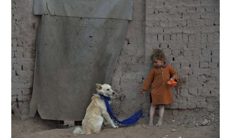 In wealth and in poverty: dogs and their human companions live together around the world, even outside this temporary home on th