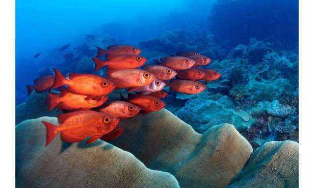 Palau's coral reefs: a jewel of the ocean