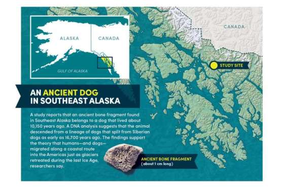 How did dogs get to America?  An ancient bone fragment contains traces