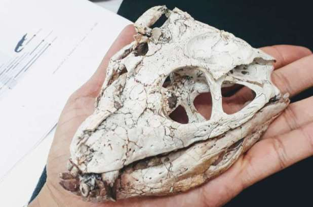 Rapid evolution was behind the success of ancient crocodiles