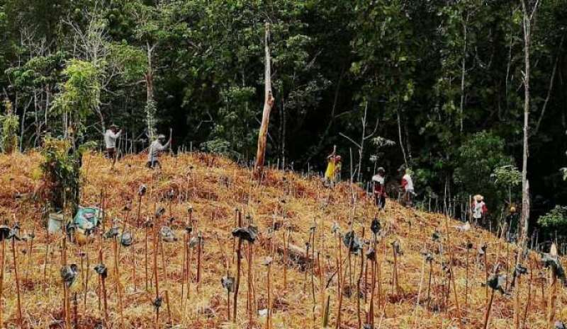 A social network for global ecosystem restoration