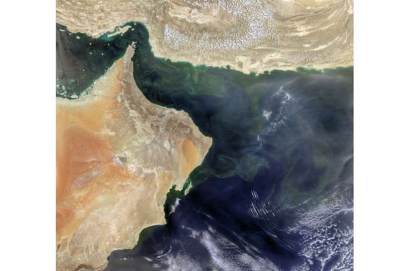 An upended ecosystem in the Arabian Sea