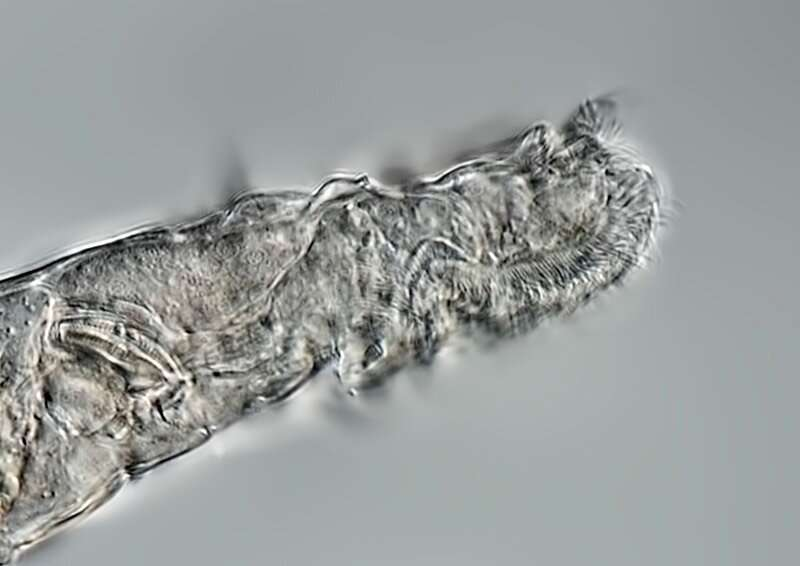 Arctic rotifer lives after 24,000 years in a frozen state
