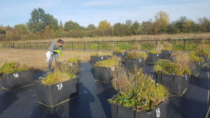 Bacteria stunt with established plant-soil feedback theory
