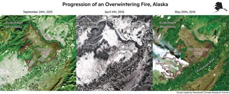 Hot summers, intense burn seasons seed 'zombie' fires: study
