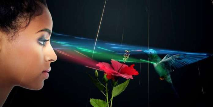 Light Field Lab debuts SolidLight – a high resolution holographic display