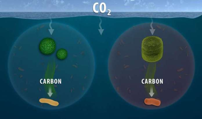 Oregon State microbiology research furthers understanding of ocean's role in carbon cycling