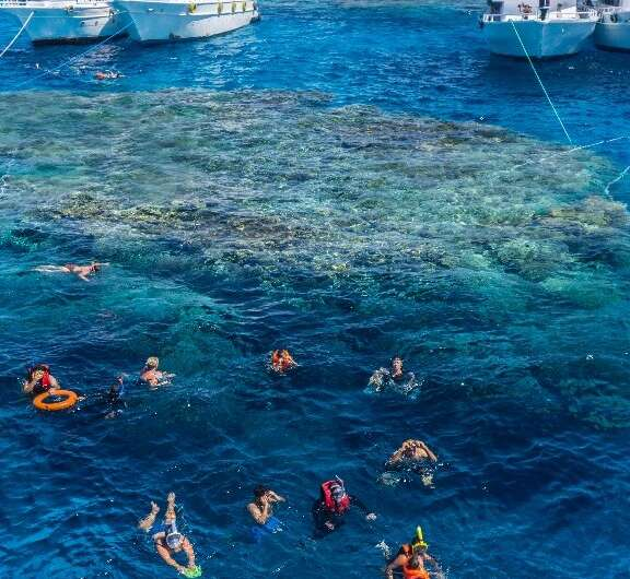 Tourists snorkel in the Red Sea above a coral reef near Egypt's Red Sea resort city of Sharm El-Sheikh at the southern tip of th