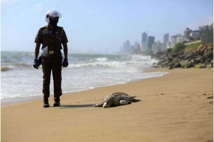 Turtle carcasses wash ashore in Sri Lanka after ship fire