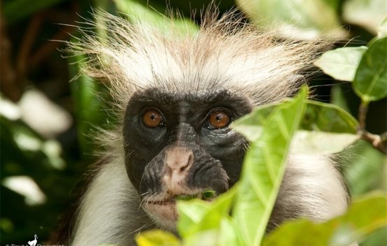 One of the rarest African primates protected … by speeds