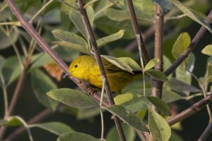 Migratory birds track climate throughout the year