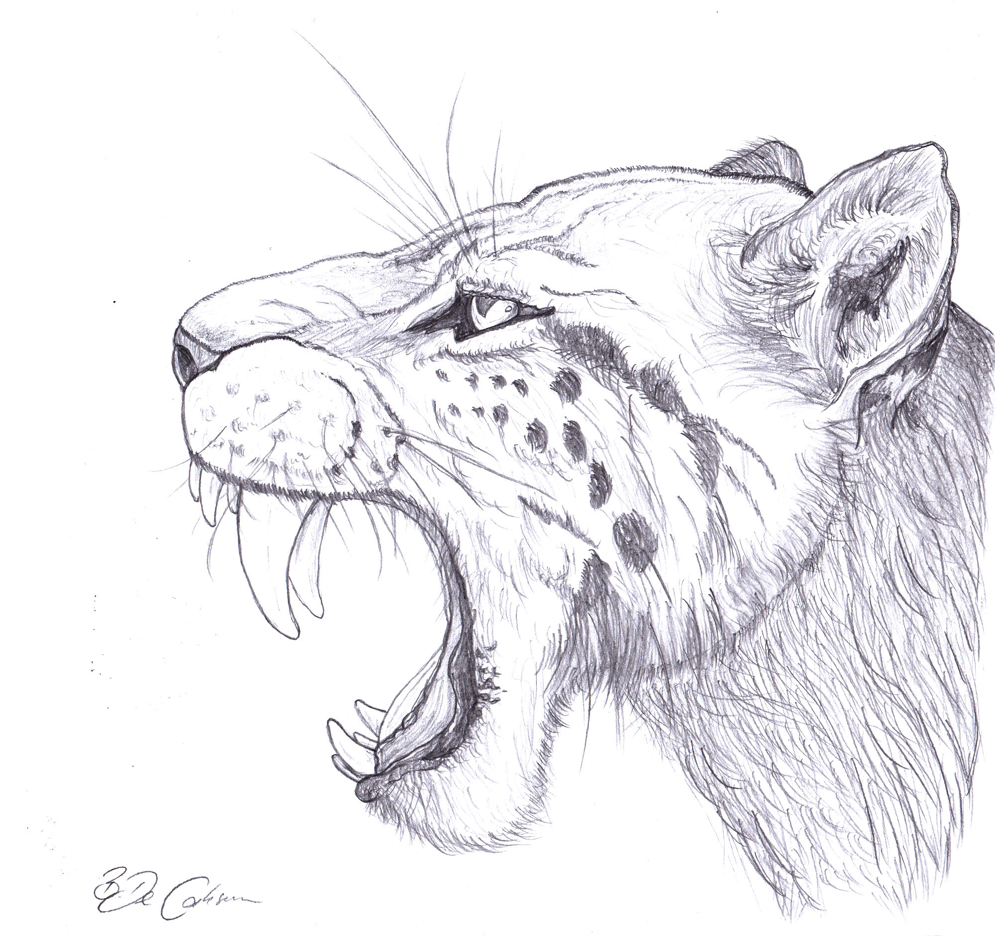 Ancient Dna Offers New View On Saber Toothed Cats Past