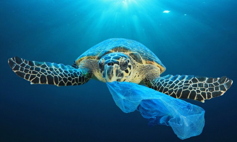 No such thing as a plastic-free lunch?