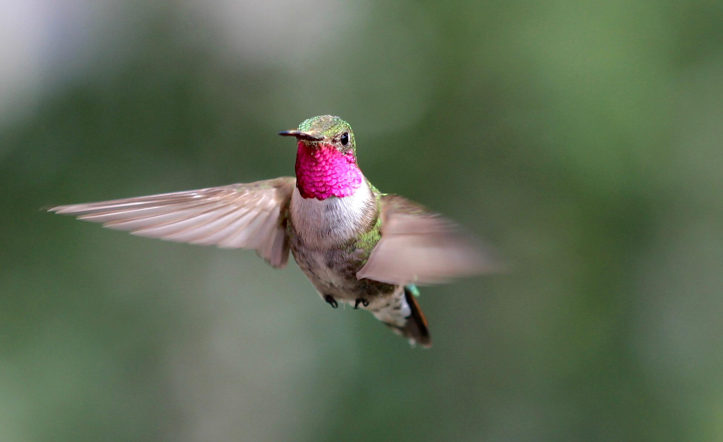 Spectacular bird's-eye view? Hummingbirds see diverse colors humans can only imagine