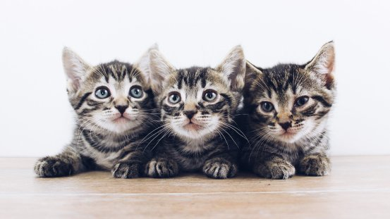 Kittens could have the key to understanding deadly diarrhea in children