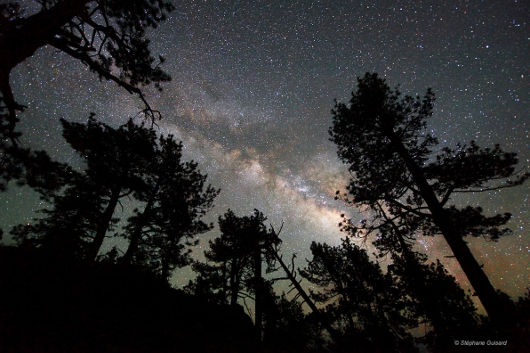 https://i2.wp.com/sd-5.archive-host.com/membres/images/164353825412355948/SGuisard_MilkyWay_above__the_pine_trees.jpg