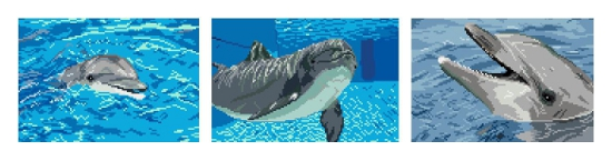 https://i2.wp.com/sd-5.archive-host.com/membres/images/164353825412355948/dauphins_termine.JPG