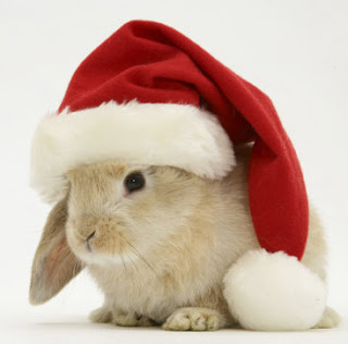 https://i2.wp.com/sd-5.archive-host.com/membres/images/164353825412355948/lapin-noel.jpg