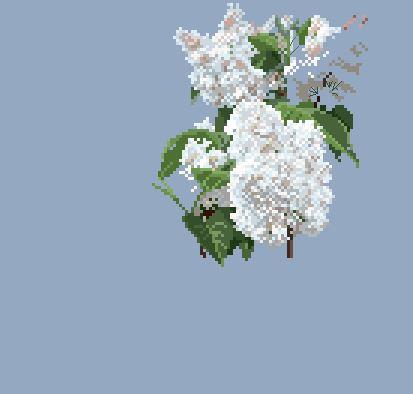 https://i2.wp.com/sd-5.archive-host.com/membres/images/164353825412355948/lilas_blanc_0703.JPG