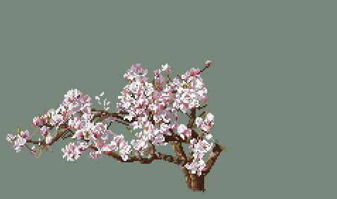 https://i2.wp.com/sd-5.archive-host.com/membres/images/164353825412355948/magnolia_1205.JPG