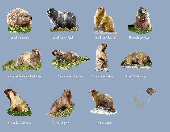 https://i2.wp.com/sd-5.archive-host.com/membres/images/164353825412355948/marmottes.jpg