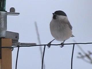 https://i2.wp.com/sd-5.archive-host.com/membres/images/164353825412355948/oiseaux_1.jpg