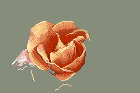 https://i2.wp.com/sd-5.archive-host.com/membres/images/164353825412355948/portrait_rose_7_0711.JPG