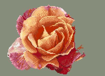 https://i2.wp.com/sd-5.archive-host.com/membres/images/164353825412355948/portrait_rose_7_1211.JPG