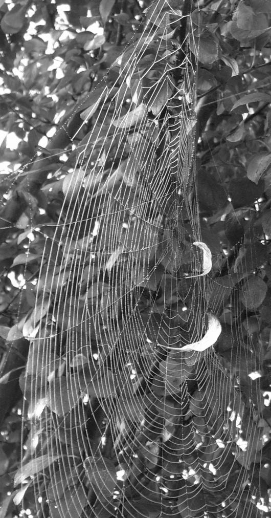 https://i2.wp.com/sd-5.archive-host.com/membres/images/164353825412355948/spiderman_d.JPG
