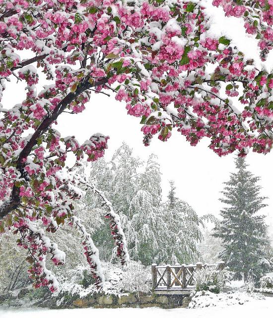 https://i2.wp.com/sd-5.archive-host.com/membres/images/164353825412355948/winter_pix_8.jpg