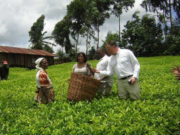Kenya Milima tea
