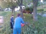 Obsekanje krošenj dreves_2
