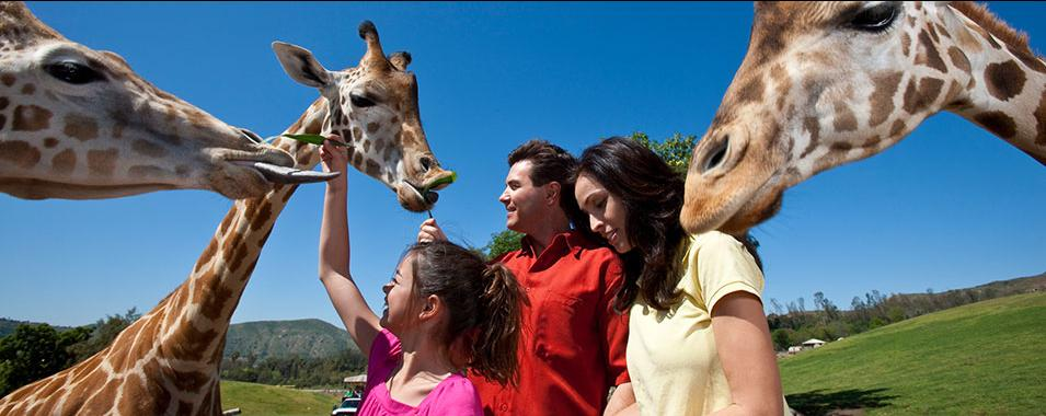 Adventure at San Diego Safari Park