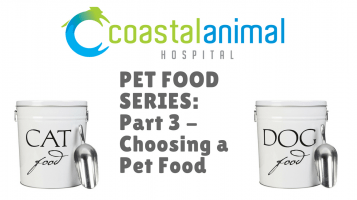 Pet Food Series, part 3: How to Choose a Pet Food