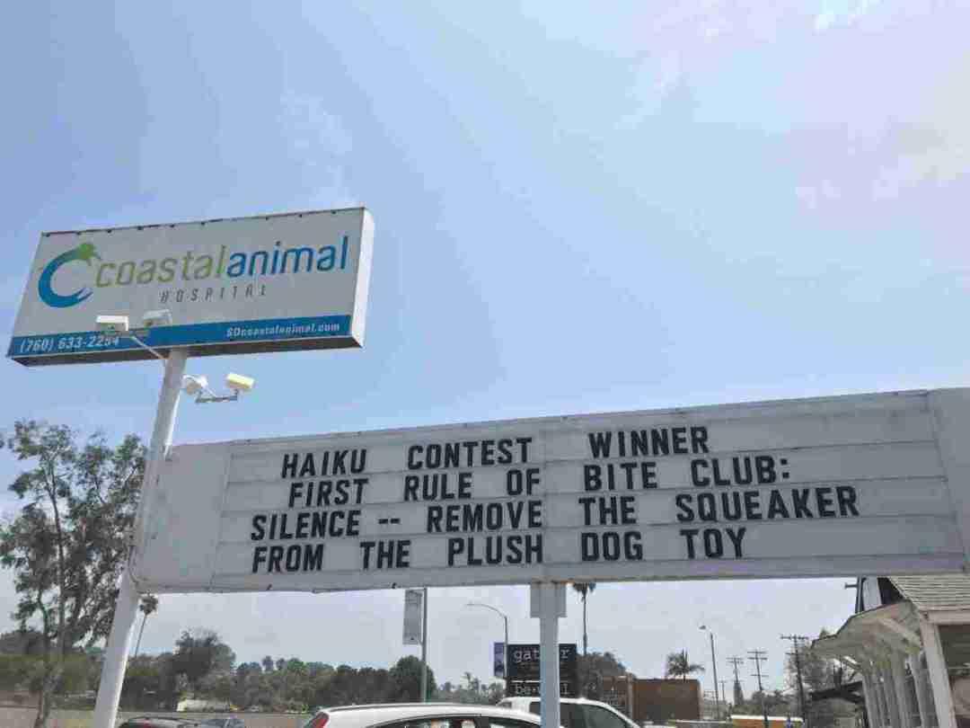 4th Annual Pet Haiku Winner - Reader's Choice