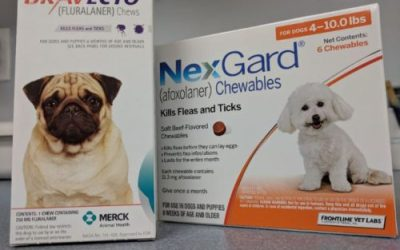 Is Nexgard going to kill my dog?!? (Spoiler alert – no)