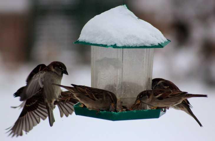 Кормушки для птиц своими руками размеры чертежи. Кормушки для птиц: фото, интересные идеи