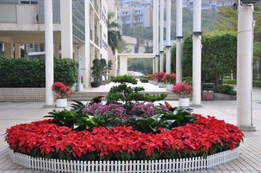 Yantian Foreign Language School, Yantian Foreign Language School, SDE Seadragon Education